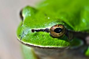animal-eyes-lake-green