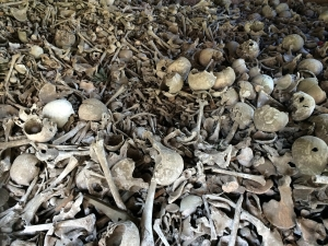 bone-664596_1280