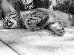 cat-181607_1280