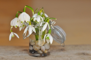 lily-of-the-valley-681146_1280