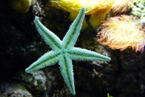 starfish-604234_1920