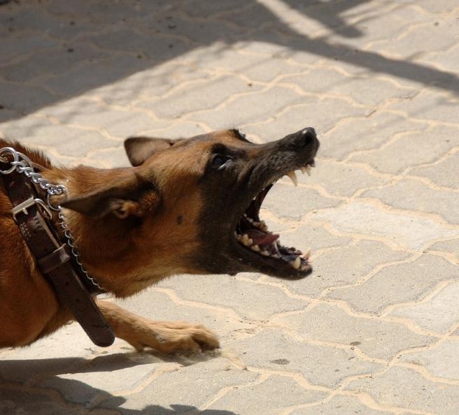 dog-900215_1280