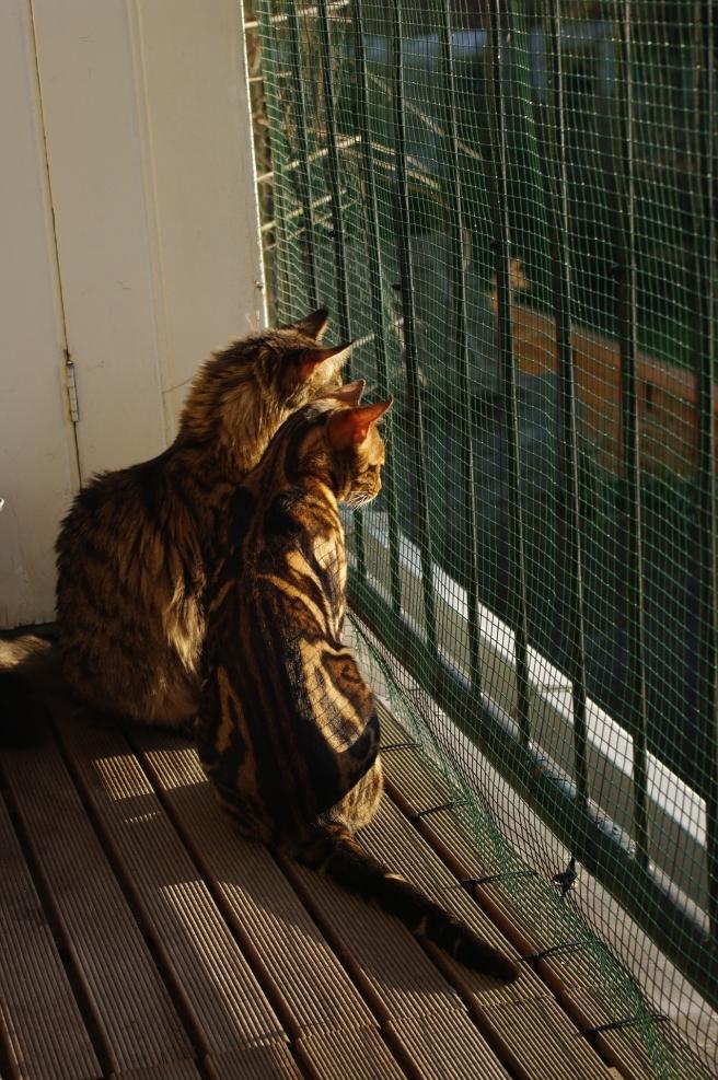 cats-955466_1920.jpg