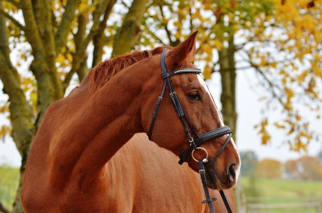 horse-1006363_1920