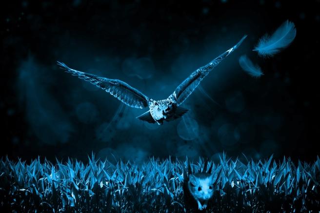 owl-517497_1920