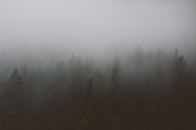 forest-801896_1280