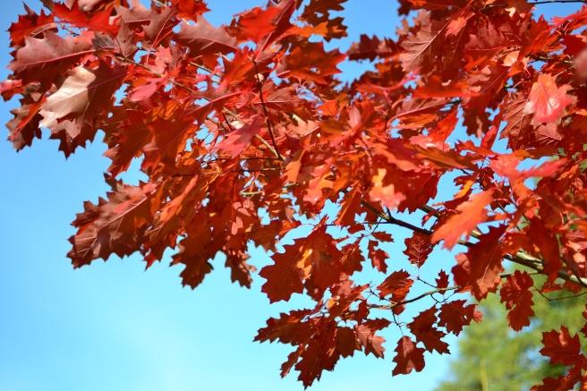 autumn-1034065_1920