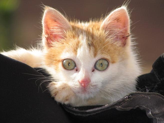 cat-1470285_1920