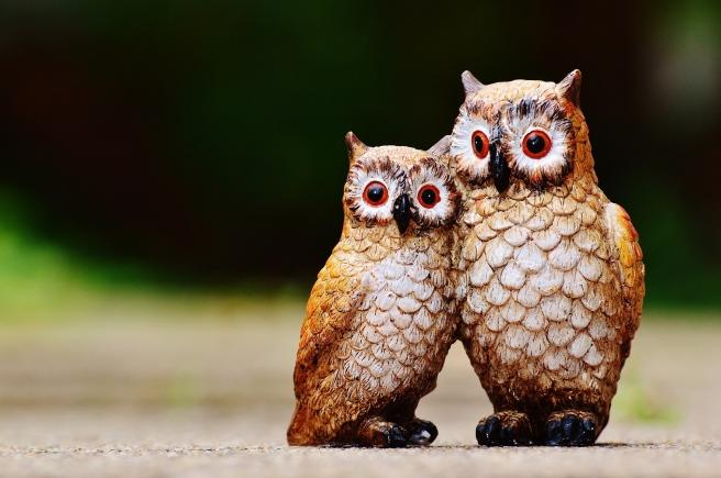 owls-982641_1920