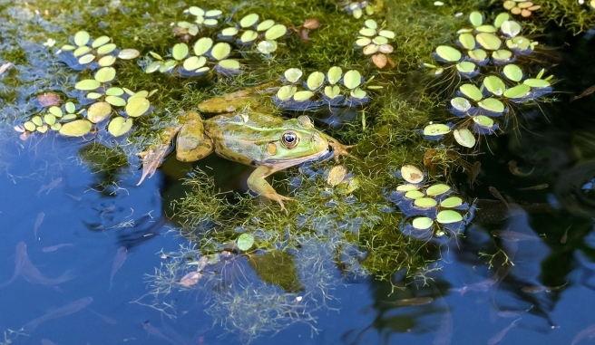 frog-929370_1280