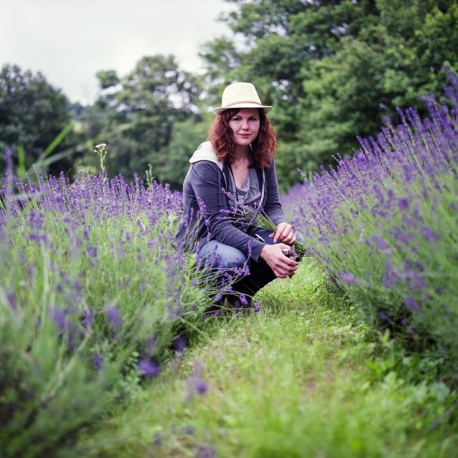 lavender-1481511_1920