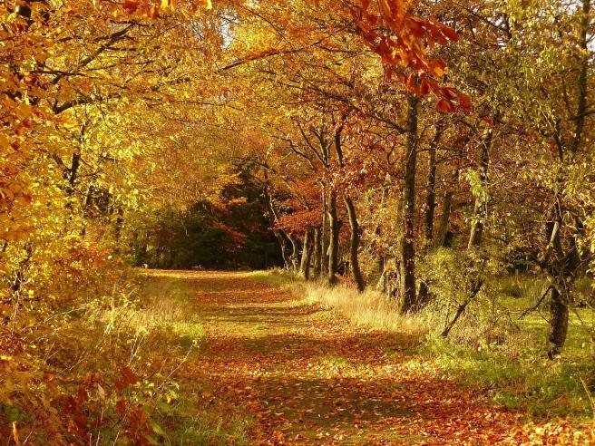 autumn-279408_1920