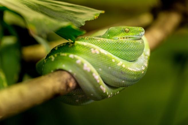 snake-1634293_1920