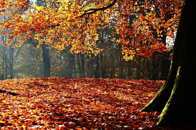 autumn-1913453_1280