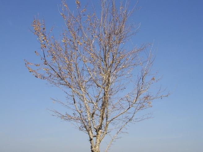 tree-19957_1920