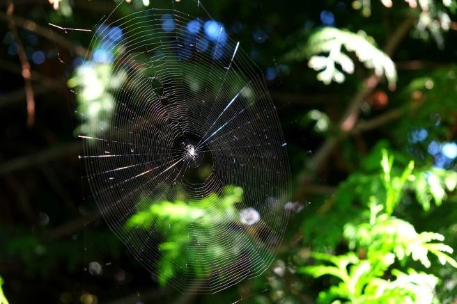 cobweb-1620743_1920