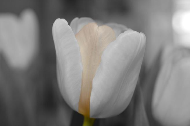 flower-144285_1920