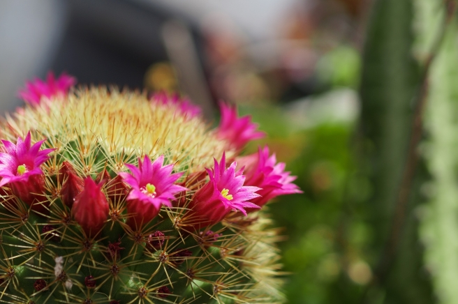 cactus-2161126_1920