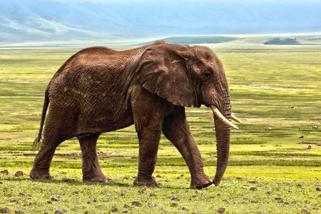 elephant-1421167_1920