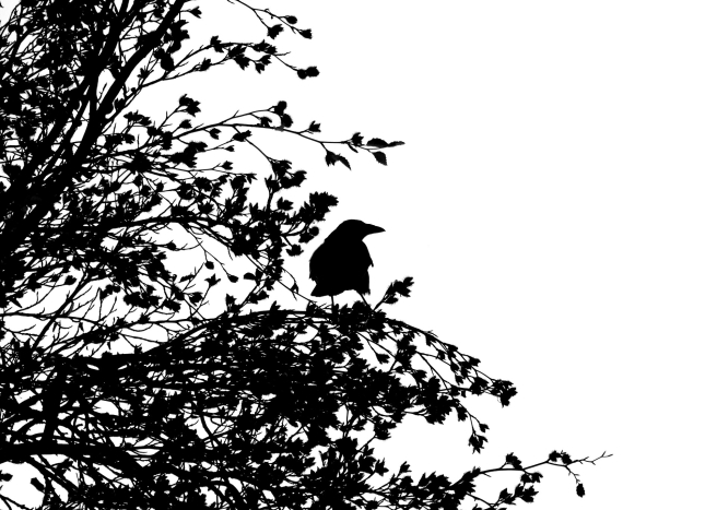 bird-1778749_1920