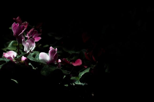 dark-2562819_1280
