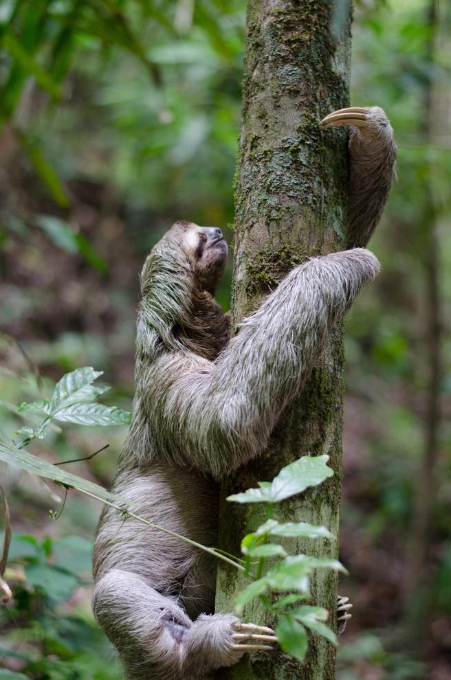 sloth-1081784_1920