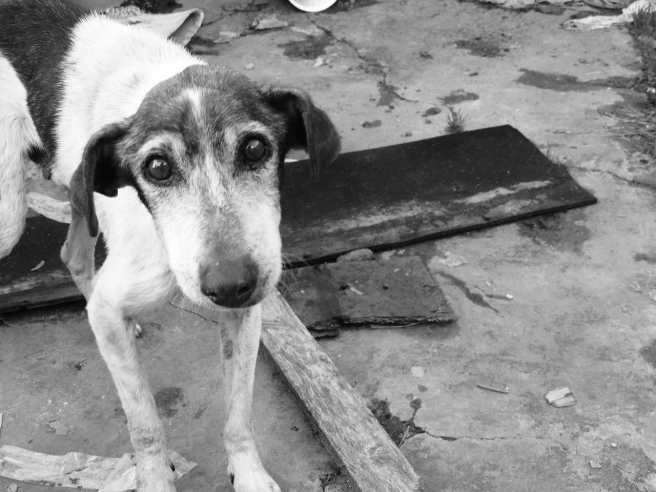 dog-1533715_1280