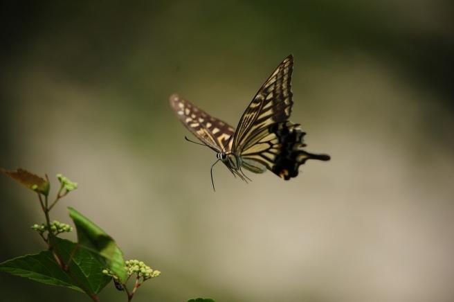 butterfly-2777706_1280