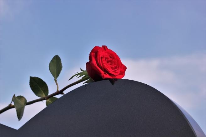 red-rose-2275111_1280