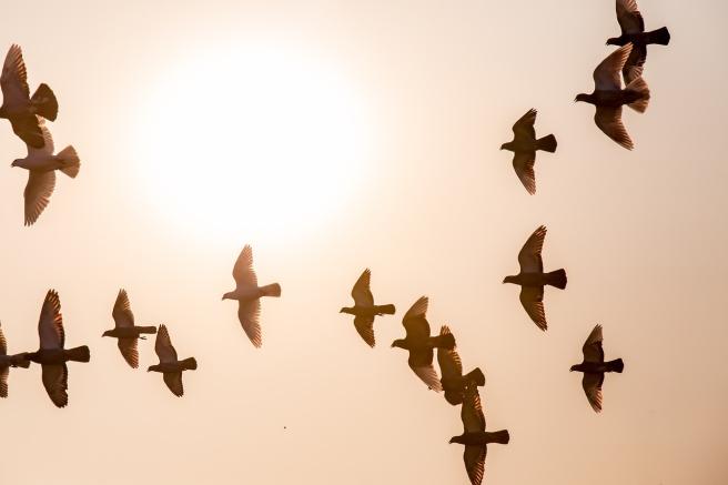 doves-1770573_1280
