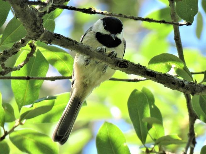 bird-2729982_1280