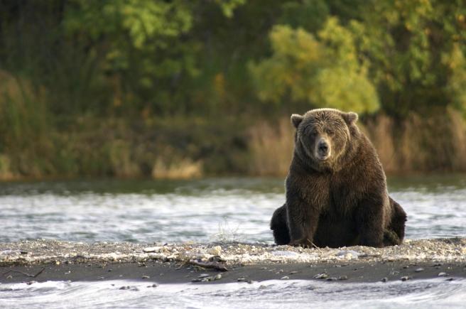 bear-2095379_1280