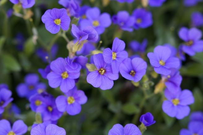 blue-pillow-322257_1280