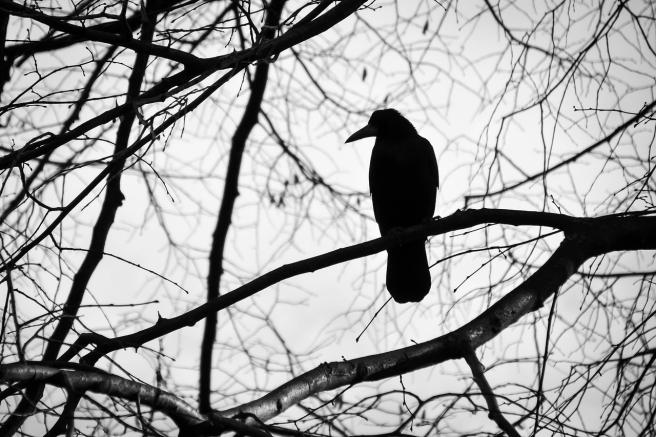 bird-2071185_1280