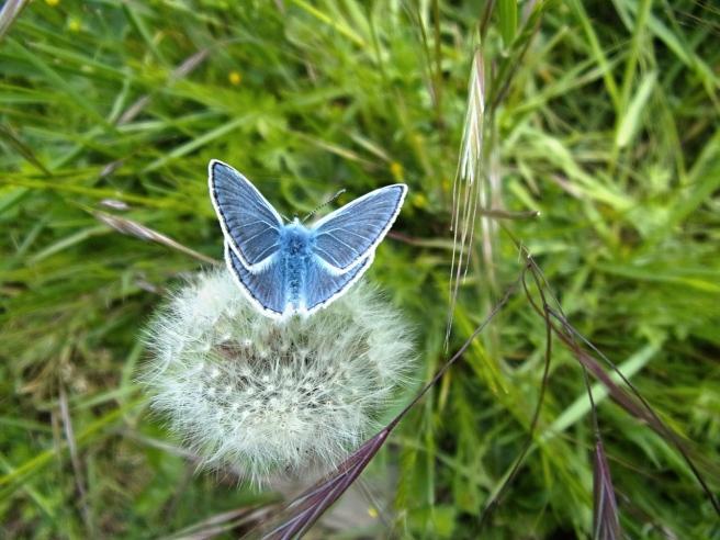butterfly-2329475_1280