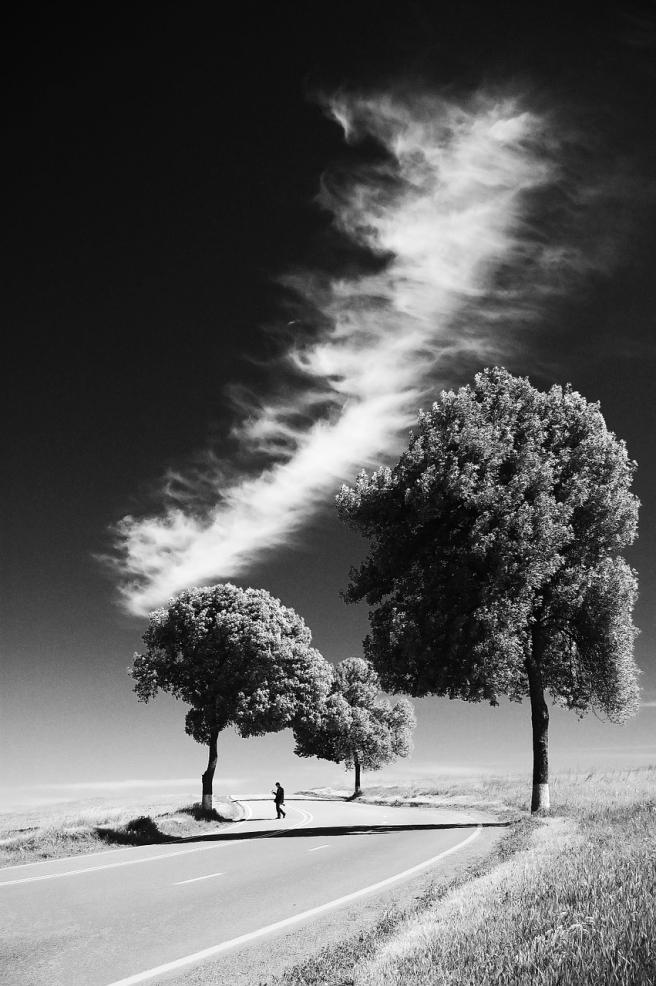 trees-1031010_1280