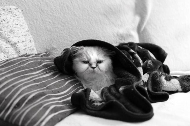 cat-1907210_1280