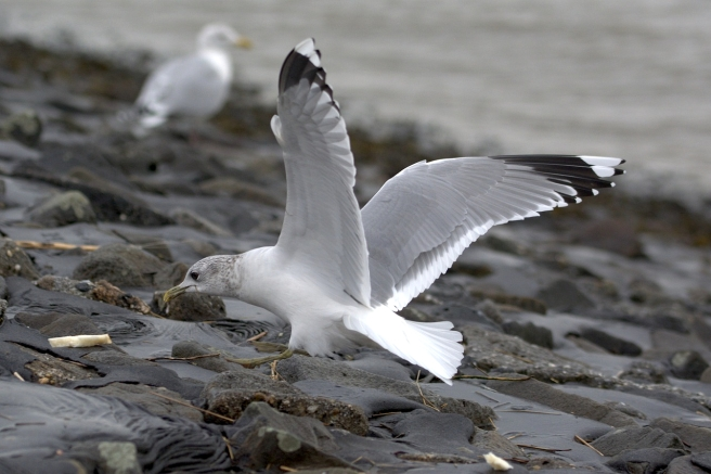 seagull-2021368_1280