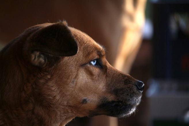 dog-2890438_1280