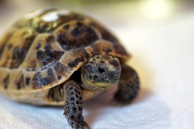 turtle-4009341_1280