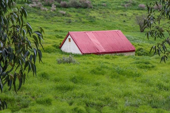 grass-4102398_1280