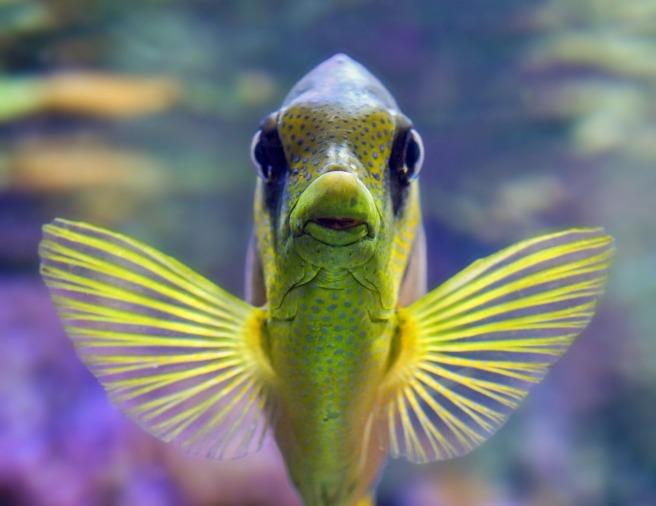 fish-3217631_1280