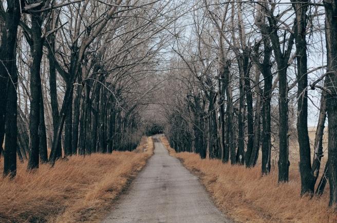 road-1246601_1280