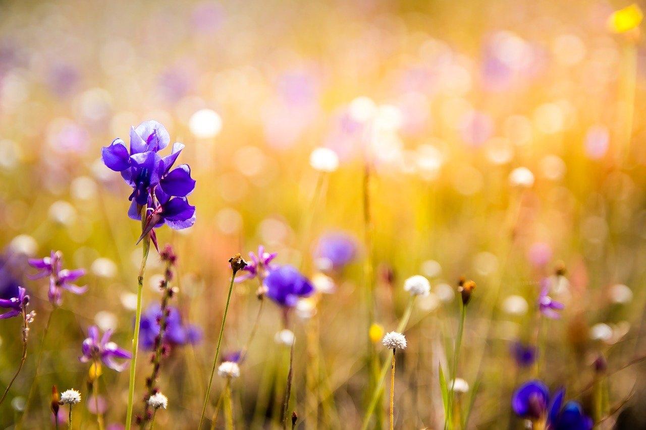 flowers-3182324_1280