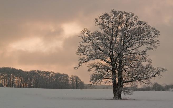 tree-1744759_1280
